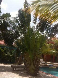 Travelers palm at Perla Boneriano