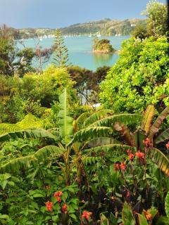 Sub-Tropical Bananas and Palms
