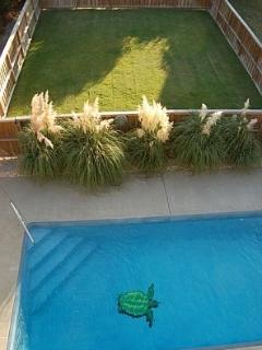 Swimming Pool and Dog/Play Yard,