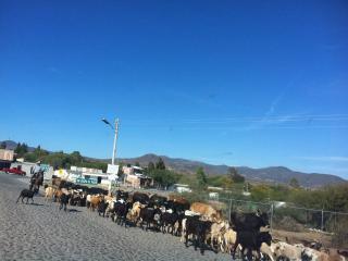 Queretaro Sustainable Cabana & San Miguel