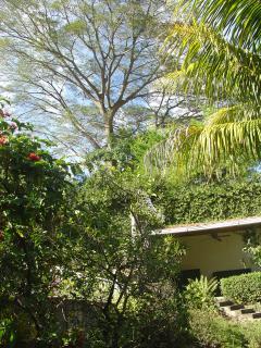 Impressive tree in backyard