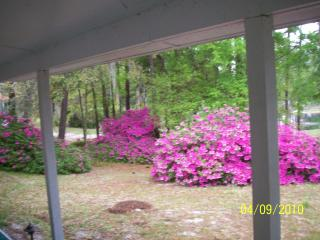 Azaleas, backyard in the spring