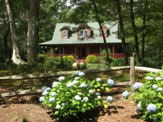 Cape Cod Signature flower – Blue Hydrangea are found right in front of the house fence