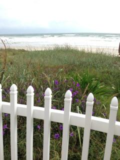 Dune flowers and a picket fence - Nice