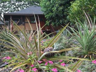 Tropical Paradise Home Heated Pool, Spa, Falls (M)