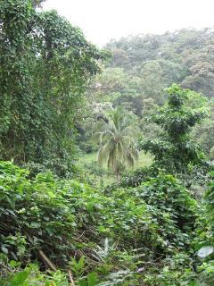 Bastimentos Rain Forest walk to Wizards Beach