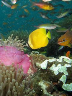 Mnemba Reef small wall
