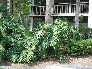Wild Pines - Bonita Bay D-101, Bonita Springs