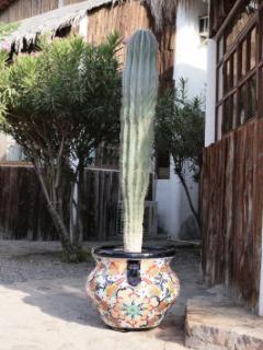 Cactus @ exterior of Casa # 8