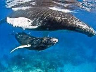 Apt6D ARCOIRIS Caraibirent Las Terrenas Playa Las Ballenas