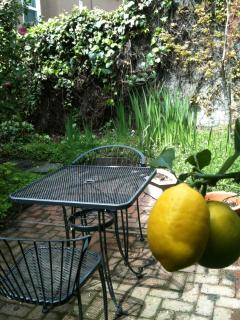 Back Yard with Citrus Trees and Culinary Herbs