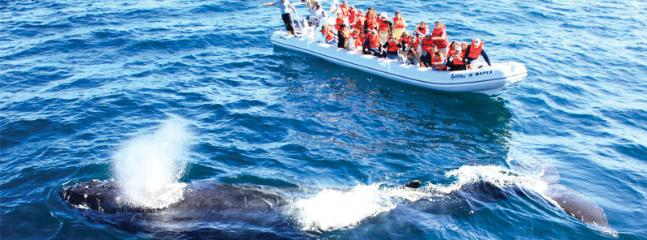 Whale Watching Bandaras Bay - up close