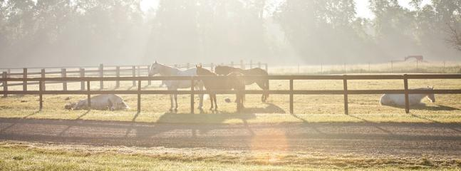 Horses at Ronora Lodge and Retreat Center