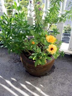 A plant on the balcony x