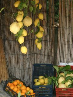 Nos agrumes: Citrons, Oranges, Pamplemousses.