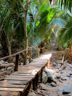 Bridge through the jungle to the palapa house