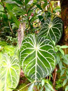 Botanical Gardens nearby