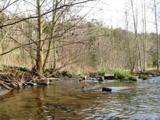 Your Native Trout Stream