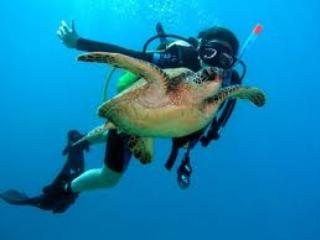 Snorkeling & Diving are amazing at Turtle Beach