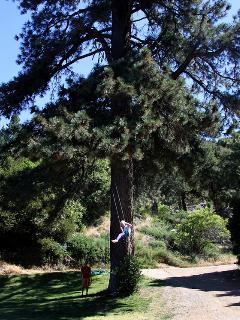 25' Tree swing