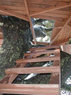 Looking up the treehouse