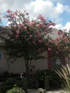 Dew Drop Inn II With Crepe Myrtle Trees in Bloom Summer Months