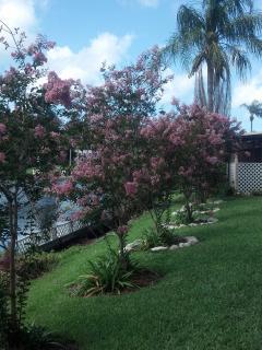 Crepe Myrtles in Bloom Everywhere in Summertime