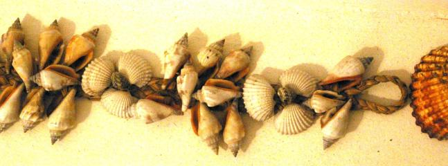 Sea shells for you to pick
