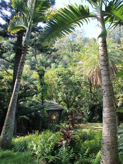 Lush jungle surroundings