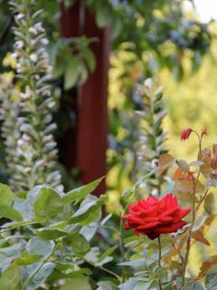 Extensive rose beds