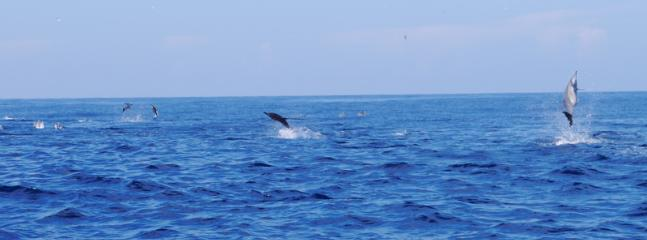 Private boat trips to see whales and dolphins