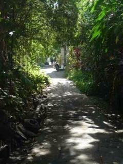 the beautiful walking path to Ubud