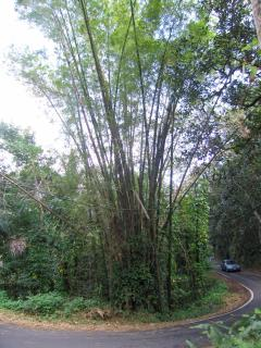 Drive into Guajataca Forest in Isabela and go hiking