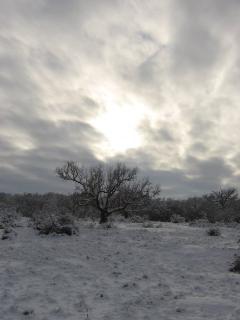 winter beauty...