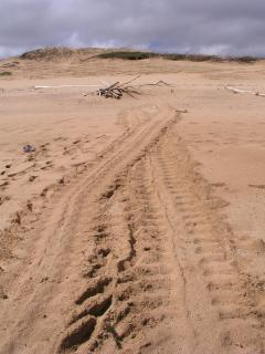 turtle tracks North Beaches Molokai