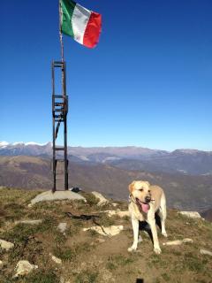 Climb the mountain with Prati Piani's labrador Cooper