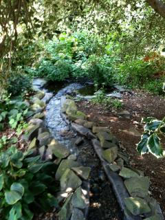 The stream and wading pool for the many birds in this area