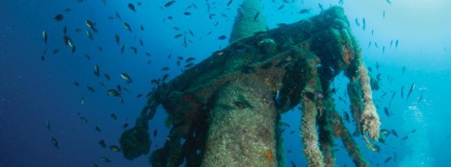 Diving at Šilo- 'Peltastis'