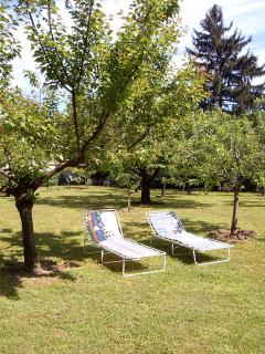 the orchard behind the house