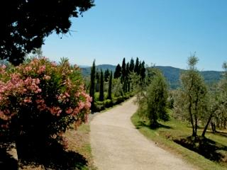 Vacation apartment & pool in Tuscany, Chianti, Montegonzi