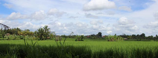 Rice paddy field in front of Villa Santun
