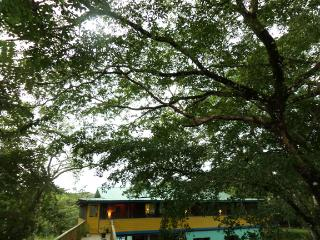 Belize River House with tree house, Gales Point