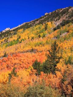 Aspen Grooves throughout area!