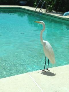 You share the pool with the birds only not strangers