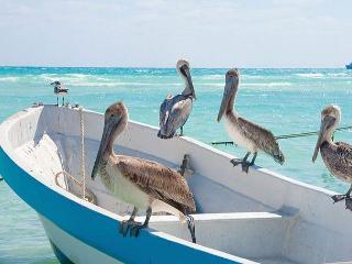 1 BEDROOM +THE BEST LOCATION + Mamitas Beach+ Affordable Price + Free WIFI, Playa del Carmen