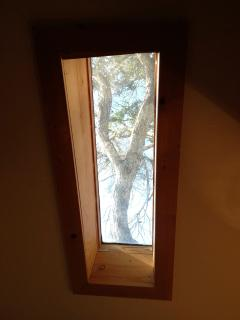 Skylight! Trees!