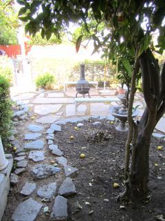 wondeful yard with fruit trees