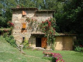 Cicogna - 57843001, Terranuova Bracciolini