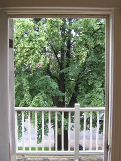 100+ yr old tree shading our large balcony