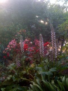 Beautiful grounds of the guesthouse and view from breakfast nook.